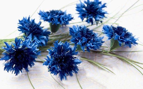 Những bông hoa cẩm chướng từ giấy bìa