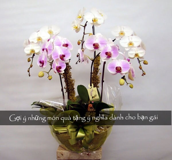 Gợi ý những món quà tặng ý nghĩa dành cho bạn gái 4