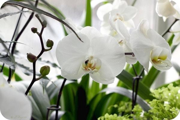Cùng tìm hiểu về ý nghĩa của loài hoa lan