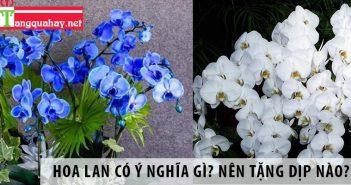 Hoa lan có ý nghĩa gì? Mỗi loại lan nên tặng vào dịp nào?