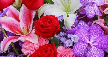 Shop hoa tươi tại Hello Hoa – Giao hàng nhanh, dịch vụ tốt