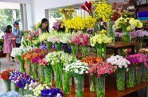 Bí quyết chọn lựa shop hoa tươi quận 7 uy tín nhất