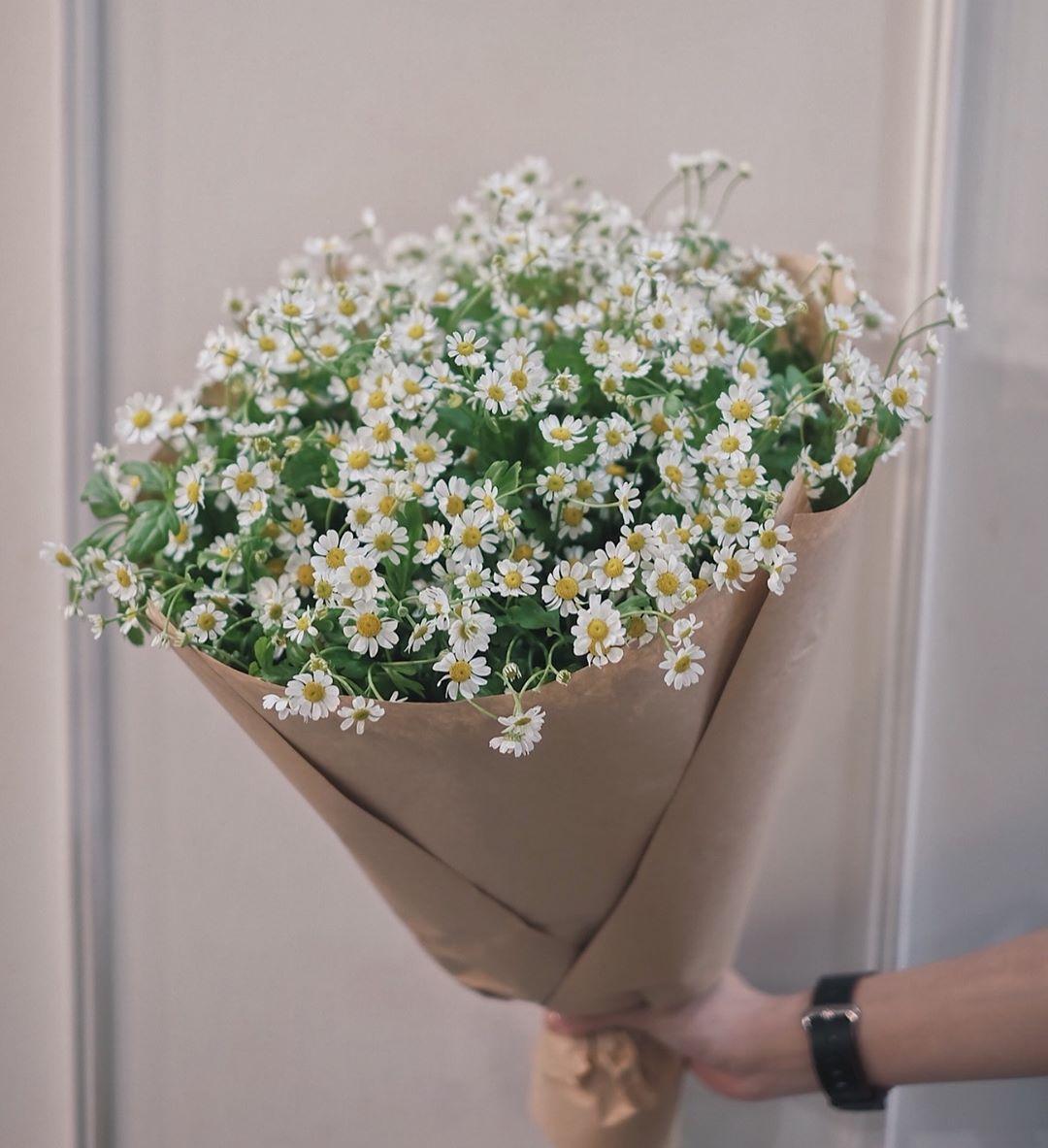 Hoa cúc họa mi tặng người yêu ngày lễ tình nhân tượng trưng cho Tình yêu thầm lặng