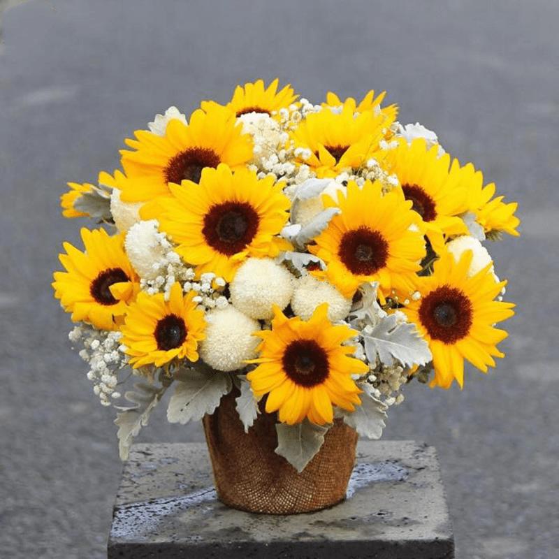 Hoa hướng dương – Thay lời chúc cha khỏe mạnh